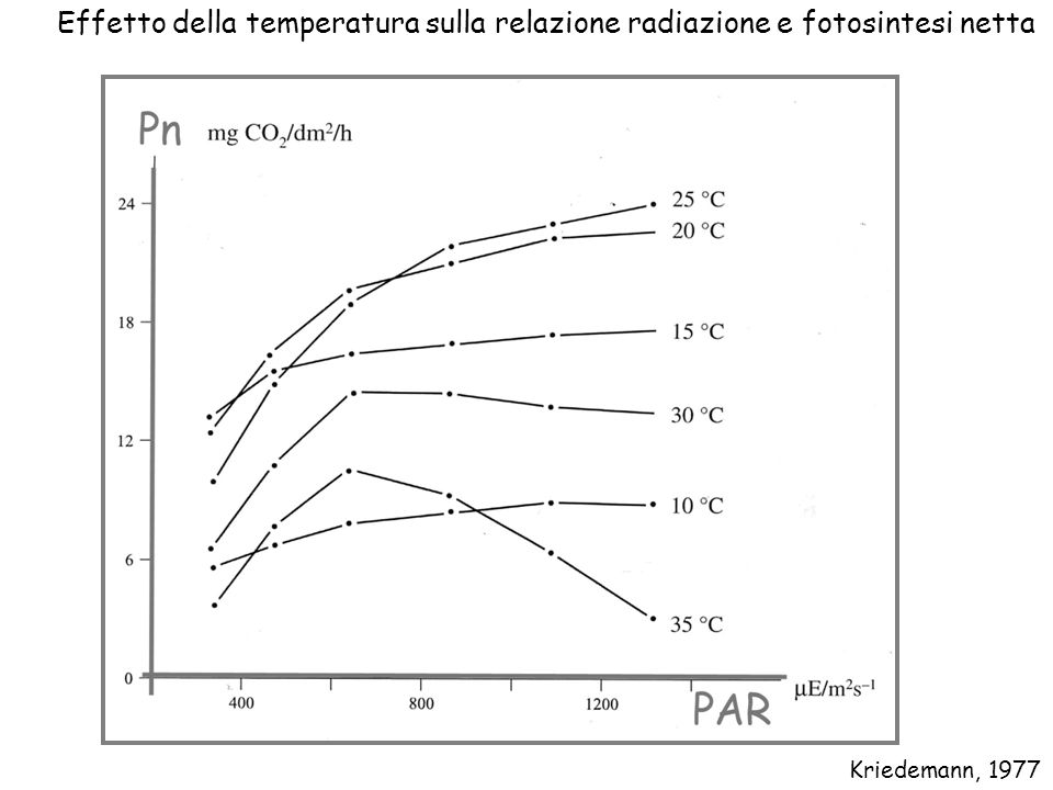 Effetto della temperatura sulla relazione radiazione e fotosintesi netta Kriedemann, 1977
