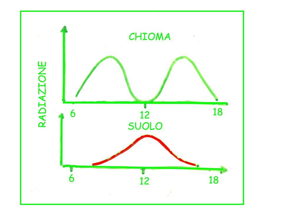 Non si può ridurre B riducendo D, perché la zona produttiva è bassa e riceverebbe scarsa energia D E possibile ridurre B riducendo D, passando a 3,50 m B si riduce al 30% e non si compromette lintercettazione nella zona produttiva, che si trova nella parte alta della chioma.