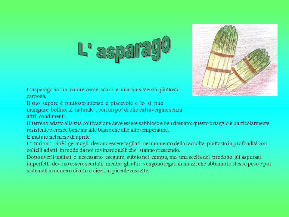 Lasparago ha un colore verde scuro e una consistenza piuttosto carnosa.