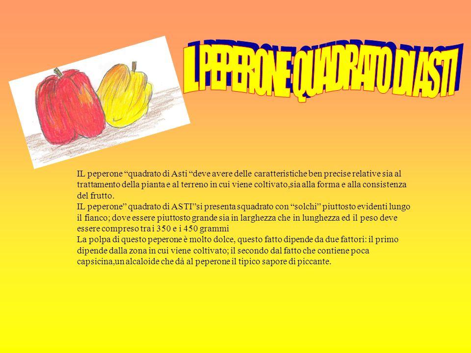 IL peperone quadrato di Asti deve avere delle caratteristiche ben precise relative sia al trattamento della pianta e al terreno in cui viene coltivato,sia alla forma e alla consistenza del frutto.