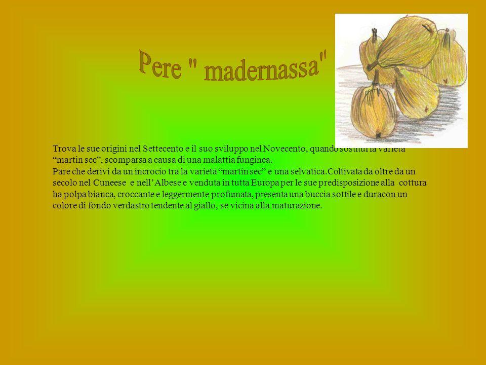 Il nocciolo è una pianta antichissima, pare originaria dellAsia Minore.