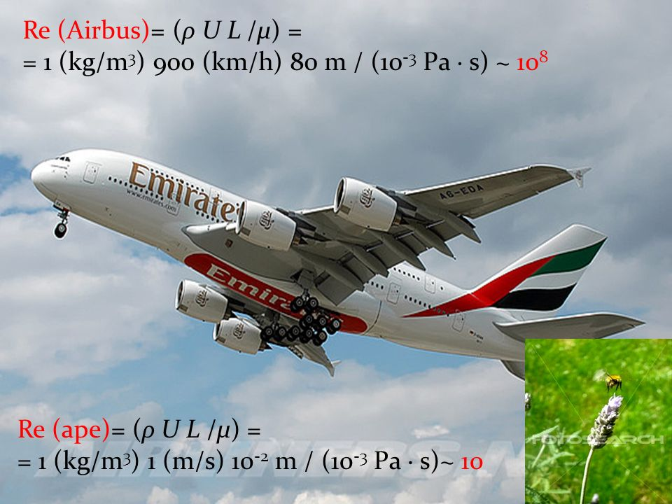 Re (Airbus)= (ρ U L /μ) = = 1 (kg/m 3 ) 900 (km/h) 80 m / (10 -3 Pa · s) ~ 10 8 Re (ape)= (ρ U L /μ) = = 1 (kg/m 3 ) 1 (m/s) 10 -2 m / (10 -3 Pa · s)~