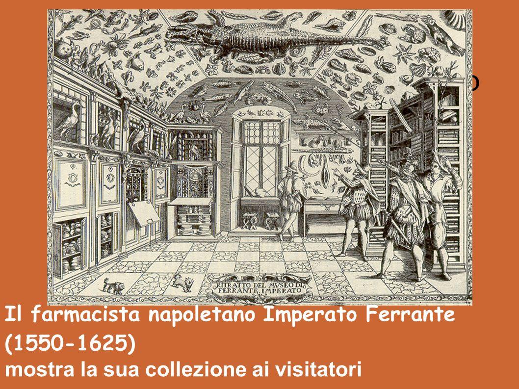 Museum of Ferrante Imperato Il farmacista napoletano Imperato Ferrante (1550-1625) mostra la sua collezione ai visitatori