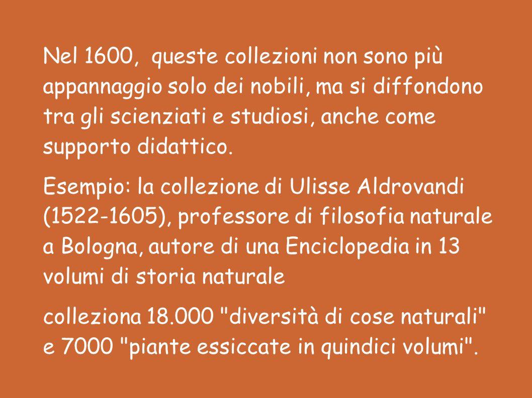 Nel 1600, queste collezioni non sono più appannaggio solo dei nobili, ma si diffondono tra gli scienziati e studiosi, anche come supporto didattico.