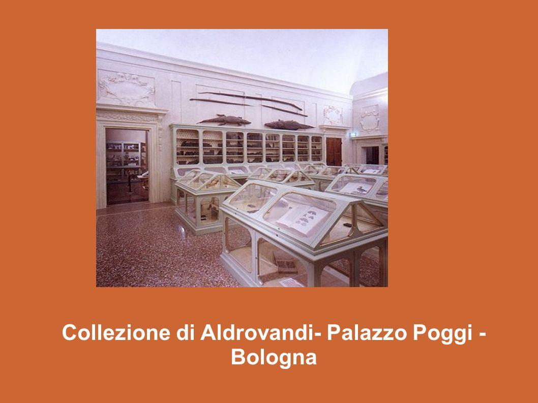 Collezione di Aldrovandi- Palazzo Poggi - Bologna