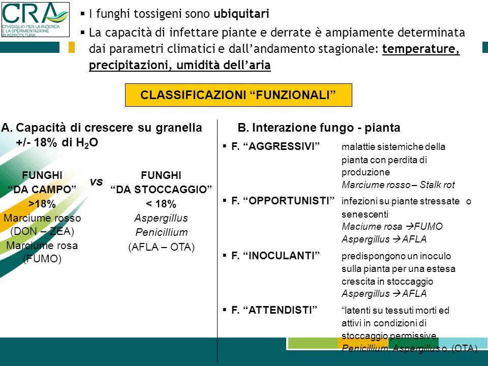 I funghi tossigeni sono ubiquitari La capacità di infettare piante e derrate è ampiamente determinata dai parametri climatici e dallandamento stagiona