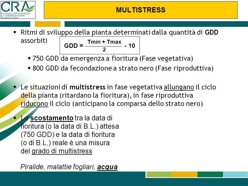 Ritmi di sviluppo della pianta determinati dalla quantità di GDD assorbiti 750 GDD da emergenza a fioritura (Fase vegetativa) 800 GDD da fecondazione