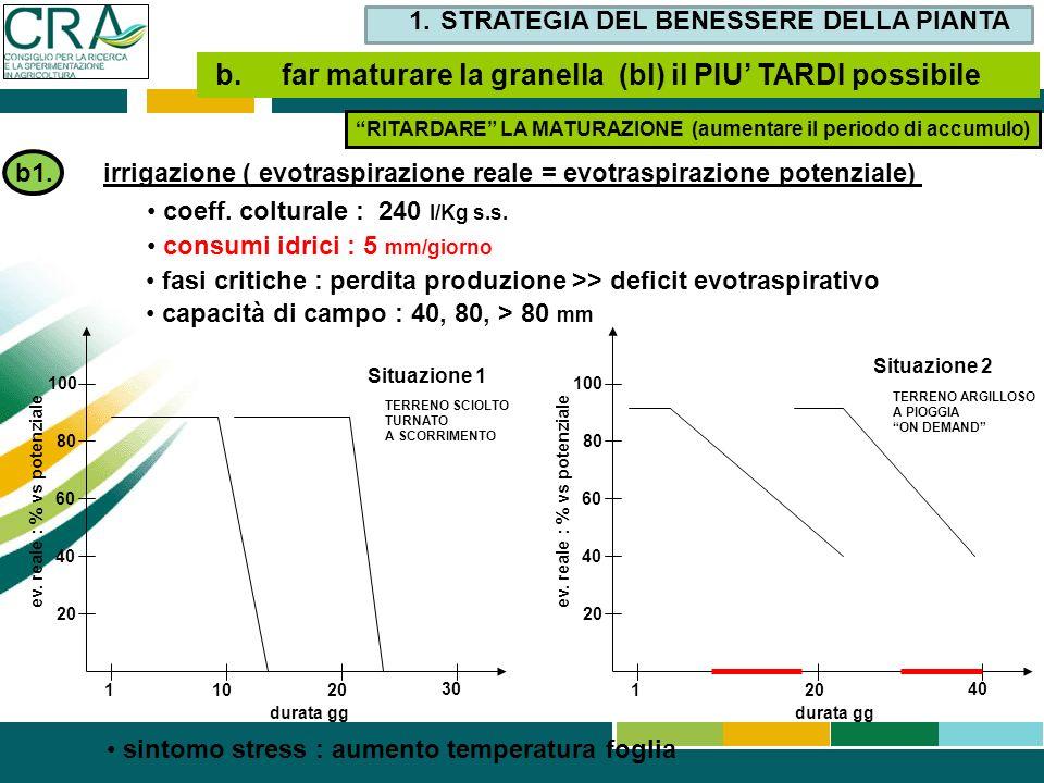 b1. irrigazione ( evotraspirazione reale = evotraspirazione potenziale) coeff. colturale : 240 l/Kg s.s. consumi idrici : 5 mm/giorno fasi critiche :