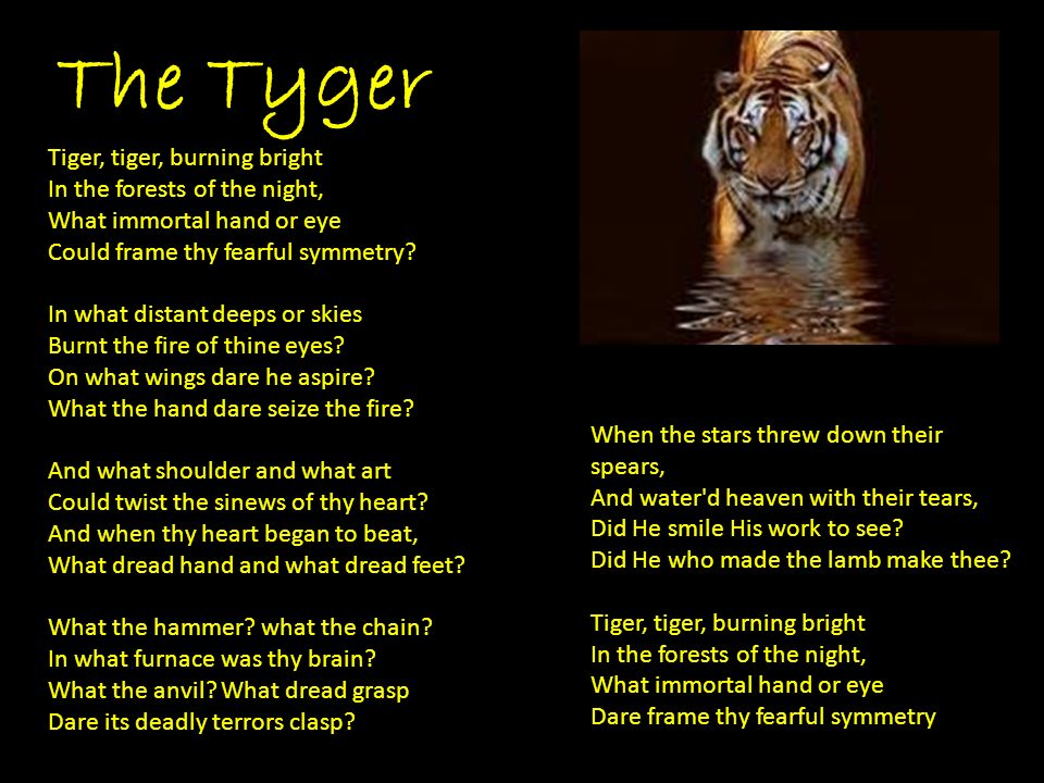 The Tyger Tiger, tiger, burning bright In the forests of the night, What immortal hand or eye Could frame thy fearful symmetry.