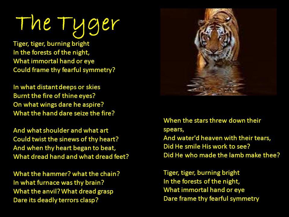 Tigre tigre che bruci luminosa nelle foreste della notte quale mano o occhio immortale potè formare la tua spaventosa simmetria?.