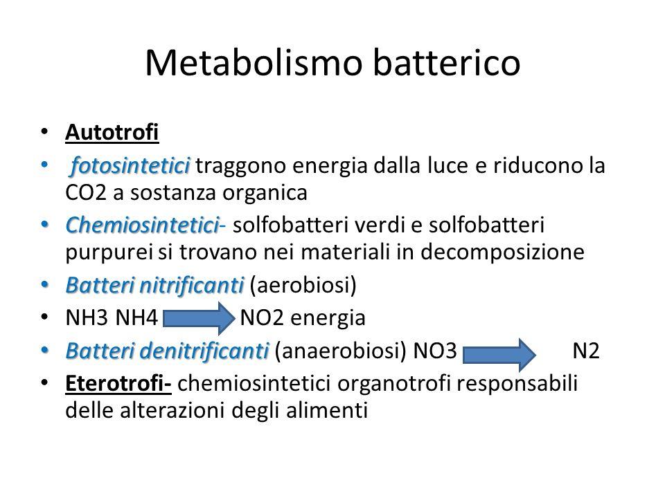 Metabolismo batterico Autotrofi fotosintetici fotosintetici traggono energia dalla luce e riducono la CO2 a sostanza organica Chemiosintetici Chemiosi