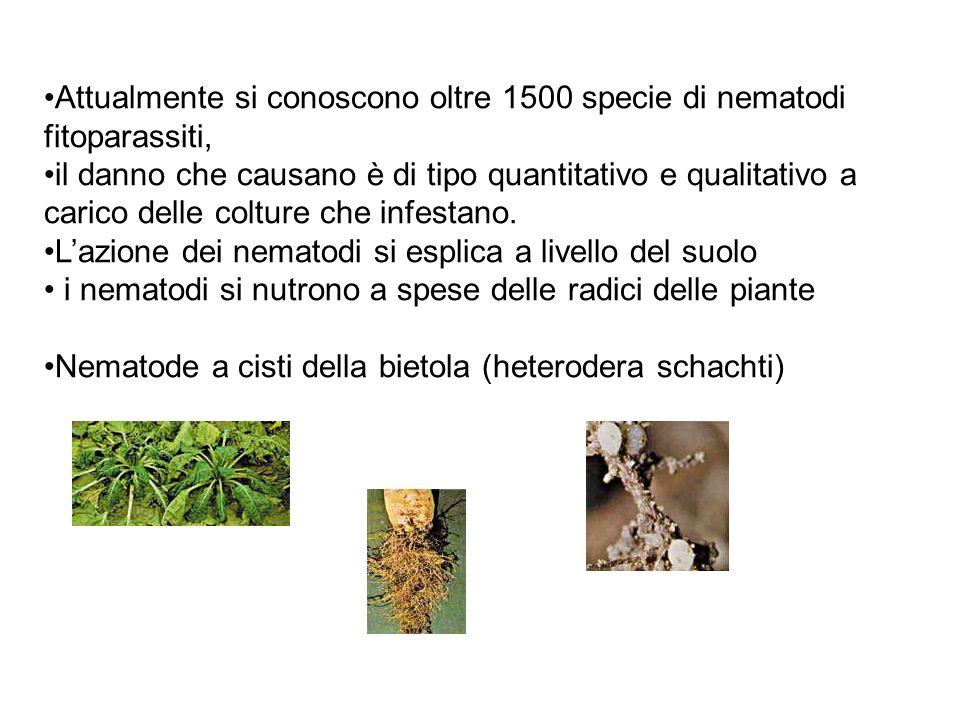 Attualmente si conoscono oltre 1500 specie di nematodi fitoparassiti, il danno che causano è di tipo quantitativo e qualitativo a carico delle colture