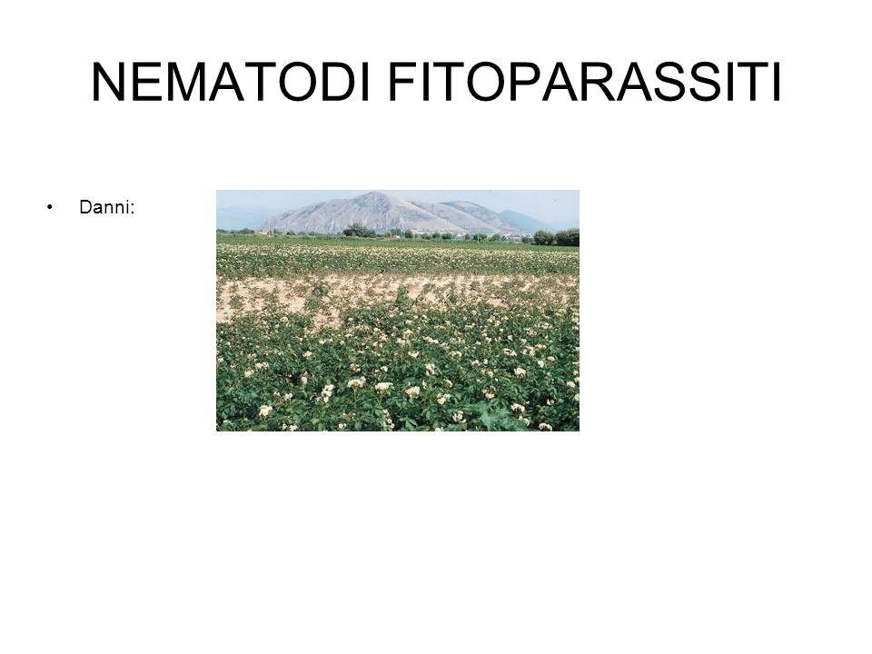 NEMATODI FITOPARASSITI Danni: