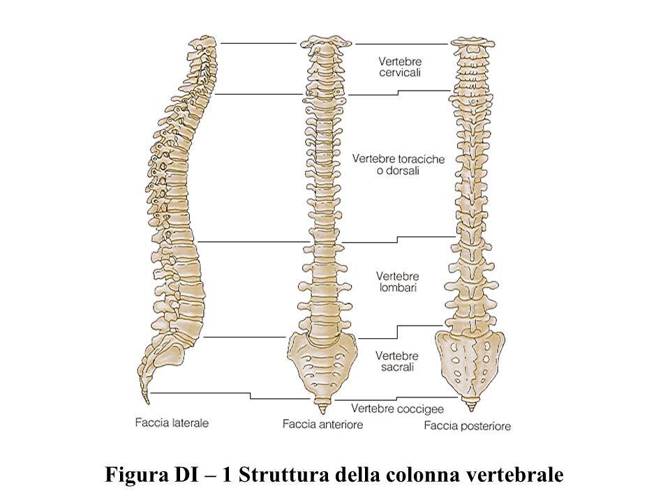 Figura DI – 1 Struttura della colonna vertebrale