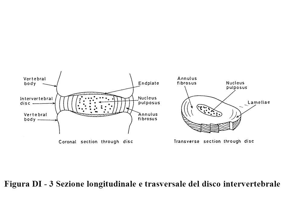 Figura DI - 3 Sezione longitudinale e trasversale del disco intervertebrale