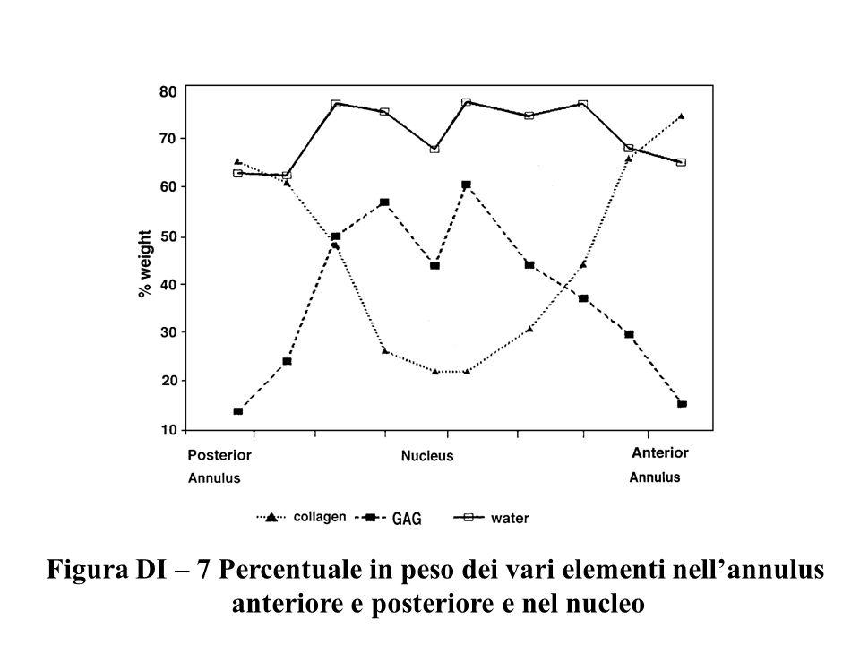 Figura DI – 7 Percentuale in peso dei vari elementi nellannulus anteriore e posteriore e nel nucleo