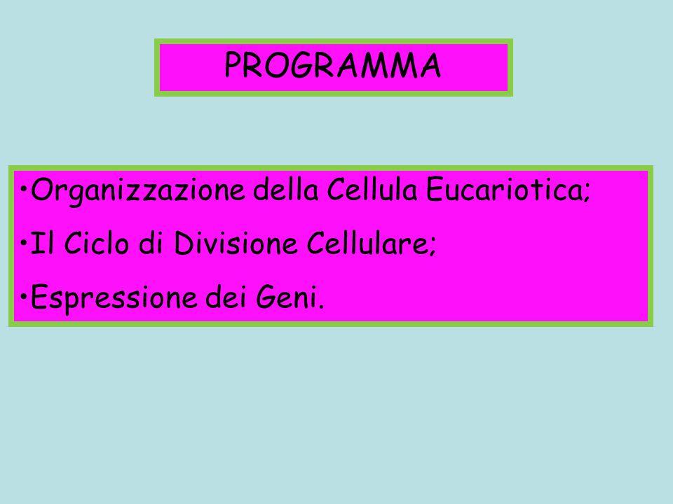 Organizzazione della Cellula Eucariotica; Il Ciclo di Divisione Cellulare; Espressione dei Geni. PROGRAMMA
