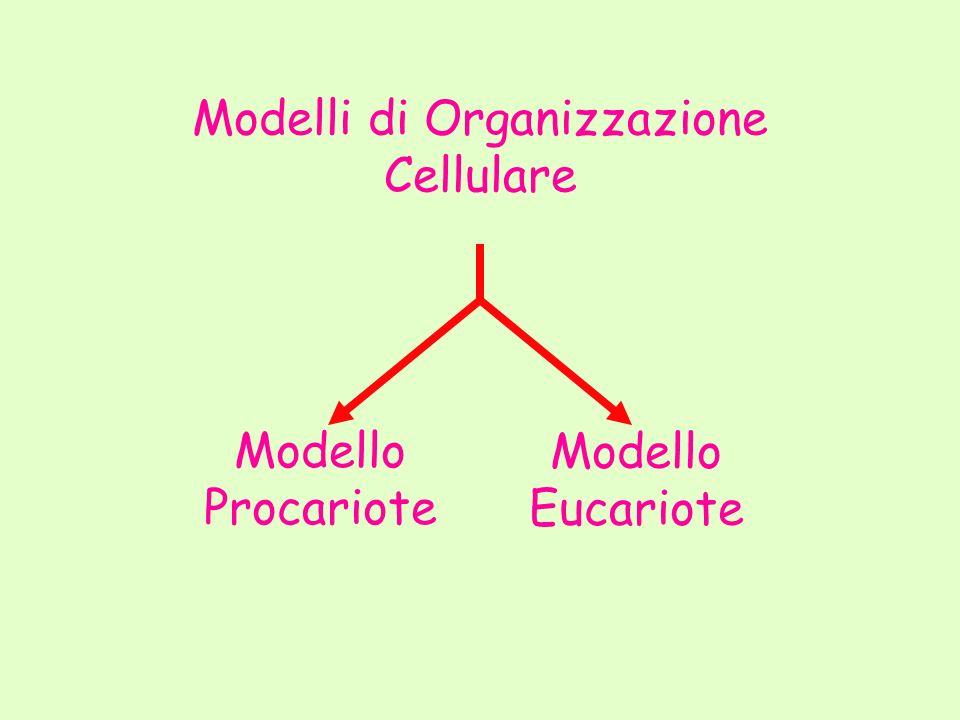 Modelli di Organizzazione Cellulare Modello Procariote Modello Eucariote