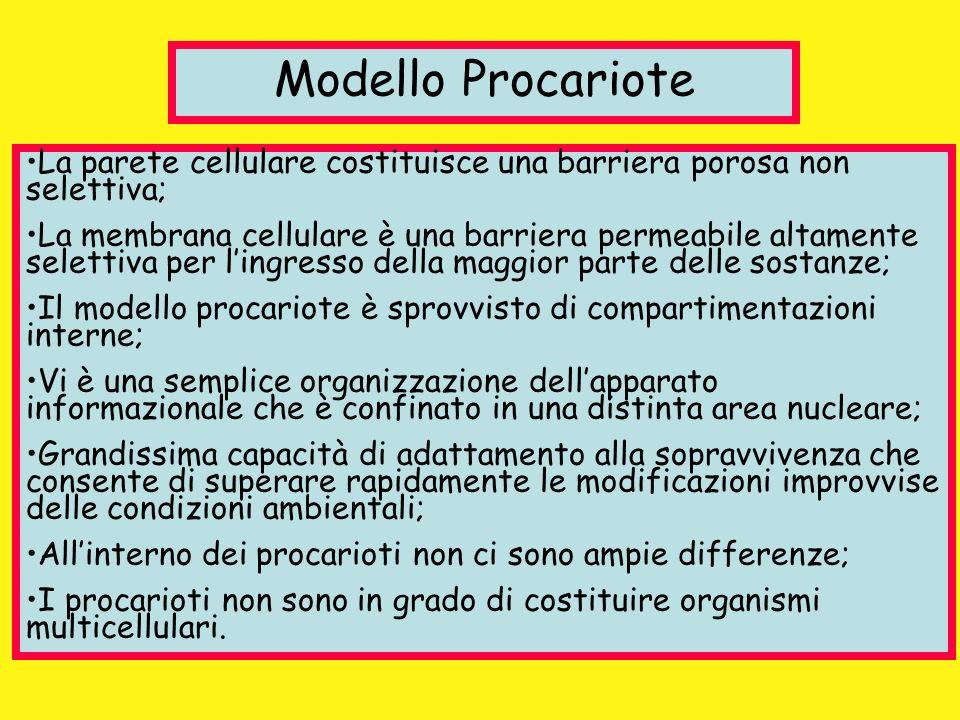 Modello Procariote La parete cellulare costituisce una barriera porosa non selettiva; La membrana cellulare è una barriera permeabile altamente selett
