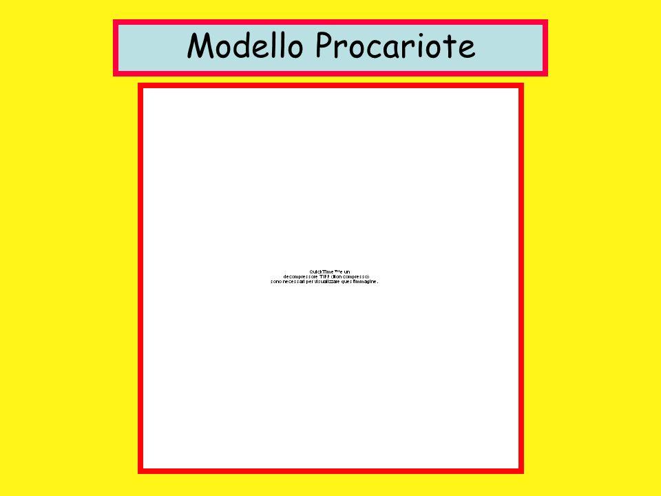 Modello Procariote
