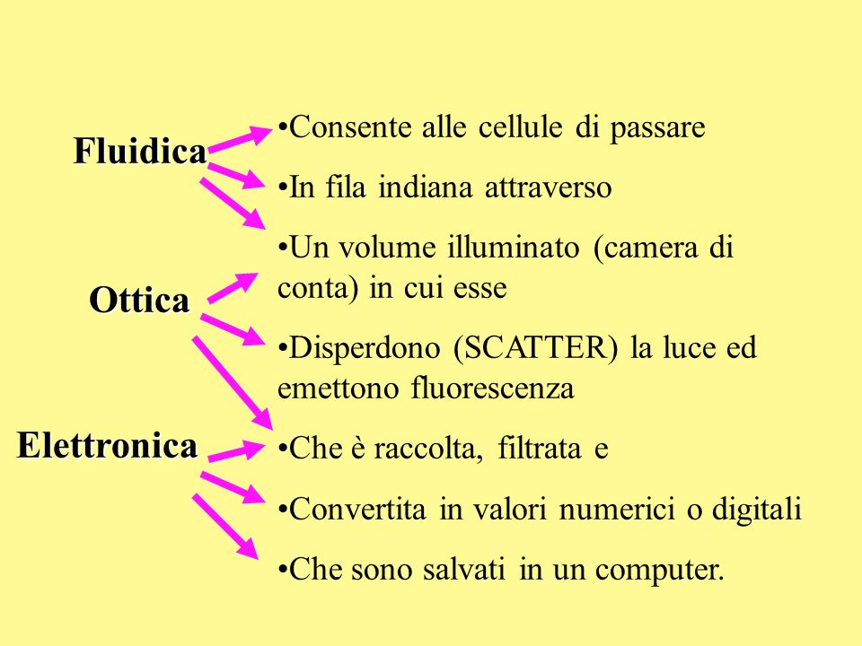 Consente alle cellule di passare In fila indiana attraverso Un volume illuminato (camera di conta) in cui esse Disperdono (SCATTER) la luce ed emetton