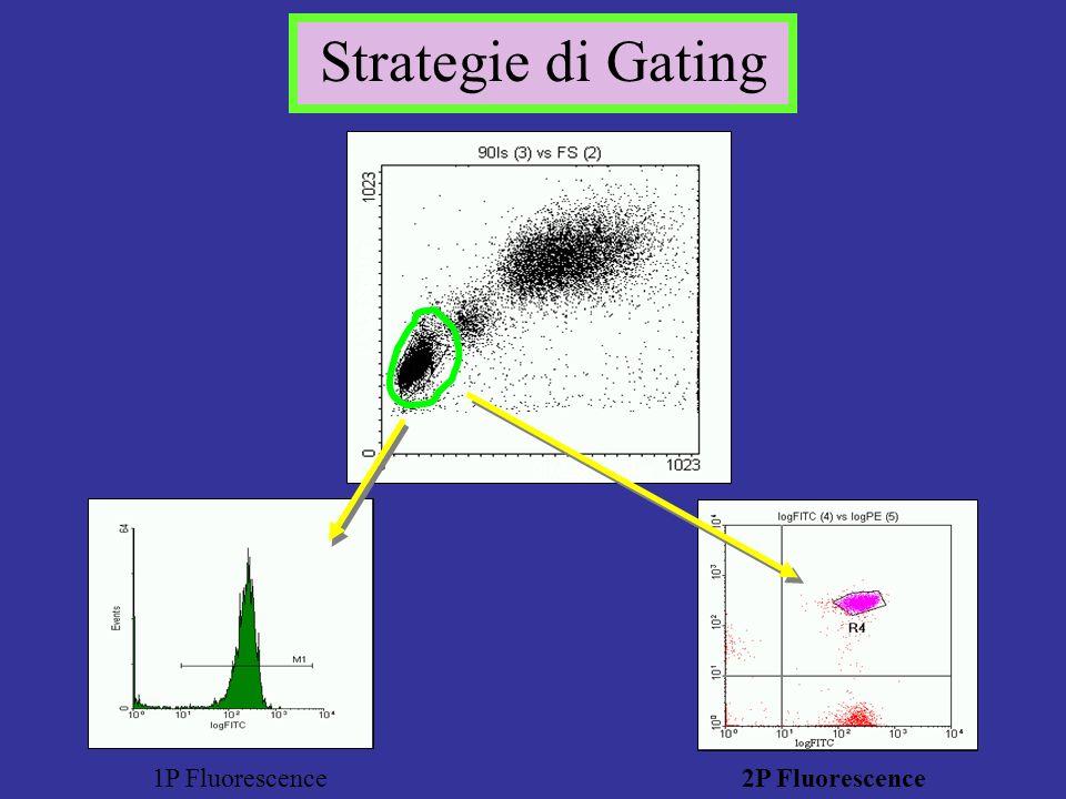 log PE 1P Fluorescence 2P Fluorescence 90 deg Scatter FALS Scatter Strategie di Gating