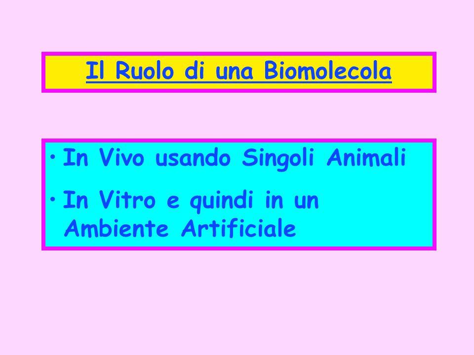 Il Ruolo di una Biomolecola In Vivo usando Singoli Animali In Vitro e quindi in un Ambiente Artificiale