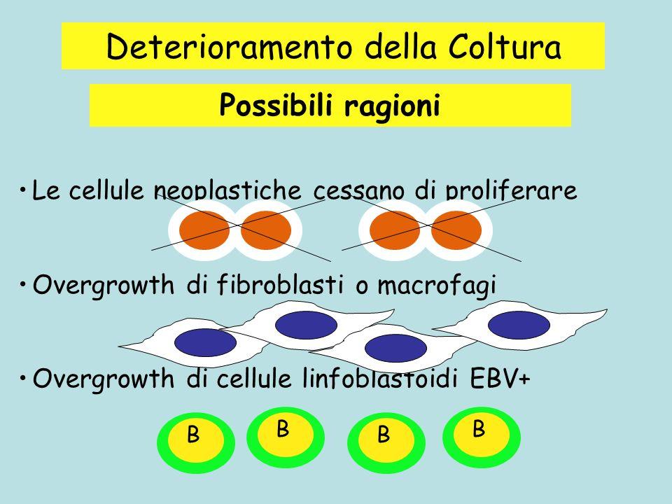 Deterioramento della Coltura Le cellule neoplastiche cessano di proliferare Overgrowth di fibroblasti o macrofagi Overgrowth di cellule linfoblastoidi