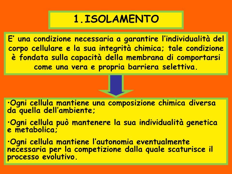 1.ISOLAMENTO E una condizione necessaria a garantire lindividualità del corpo cellulare e la sua integrità chimica; tale condizione è fondata sulla ca