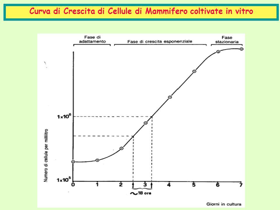 Curva di Crescita di Cellule di Mammifero coltivate in vitro