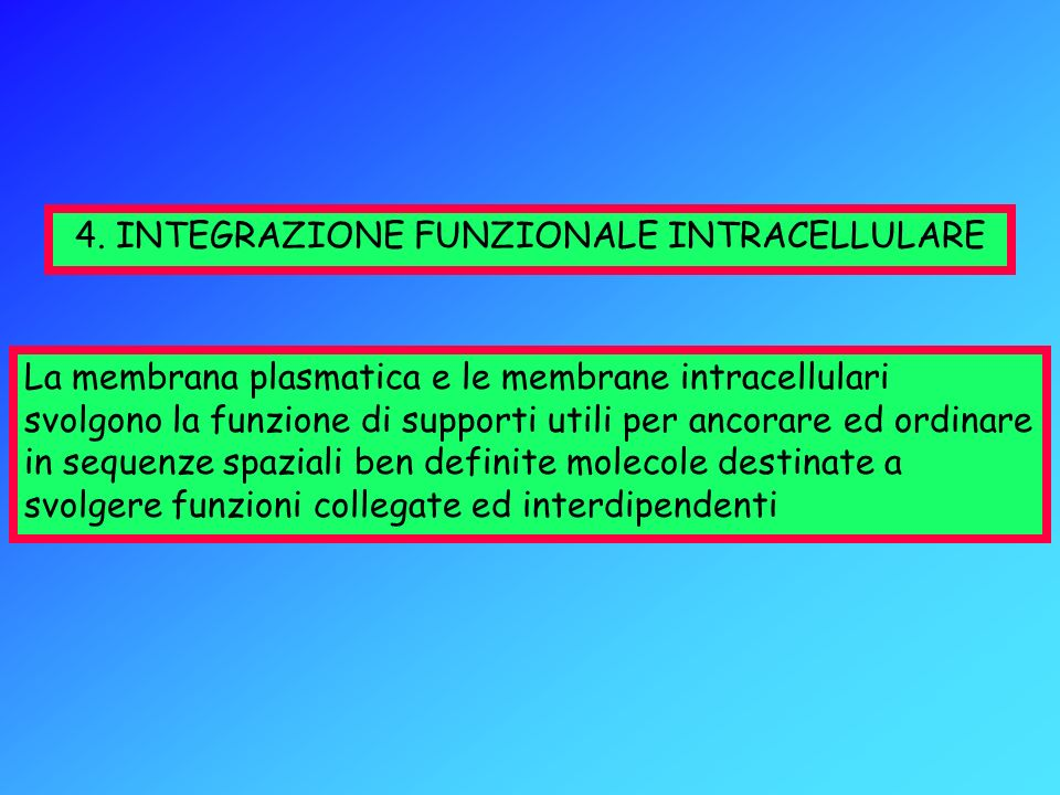 4. INTEGRAZIONE FUNZIONALE INTRACELLULARE La membrana plasmatica e le membrane intracellulari svolgono la funzione di supporti utili per ancorare ed o