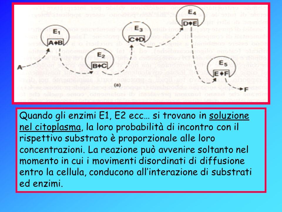 Quando gli enzimi E1, E2 ecc… si trovano in soluzione nel citoplasma, la loro probabilità di incontro con il rispettivo substrato è proporzionale alle