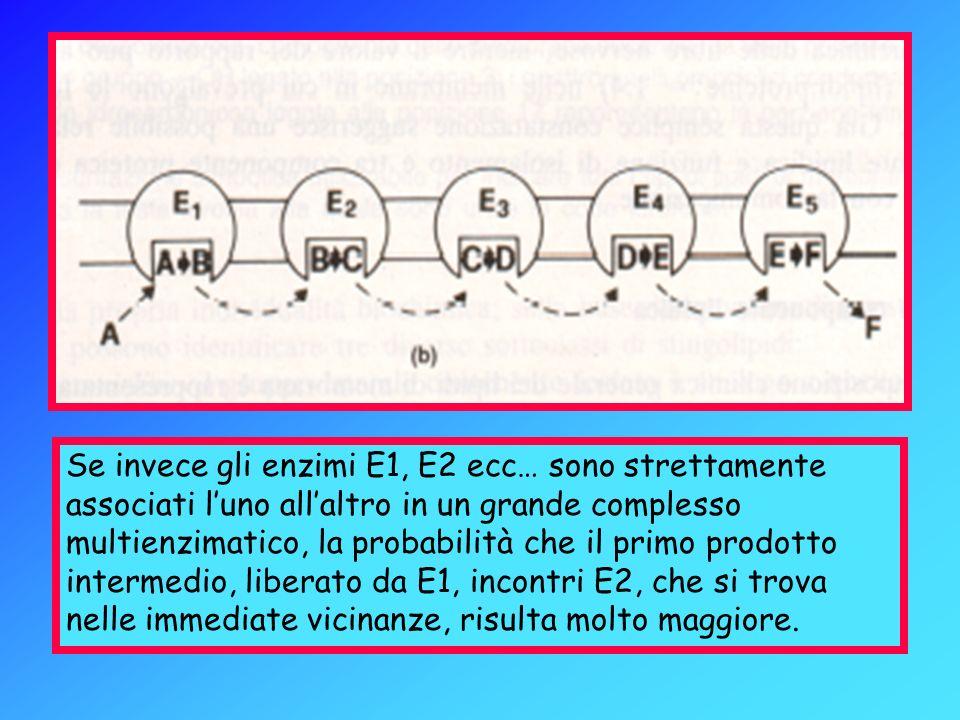 Se invece gli enzimi E1, E2 ecc… sono strettamente associati luno allaltro in un grande complesso multienzimatico, la probabilità che il primo prodott