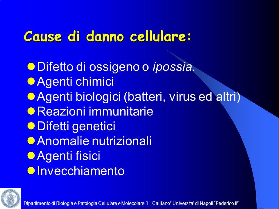Dipartimento di Biologia e Patologia Cellulare e Molecolare L. Califano Universita di Napoli Federico II Cause di danno cellulare: Difetto di ossigeno