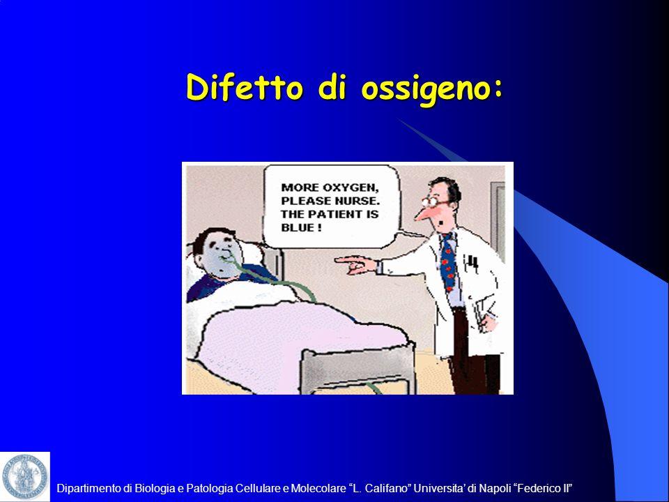 Dipartimento di Biologia e Patologia Cellulare e Molecolare L. Califano Universita di Napoli Federico II Difetto di ossigeno: