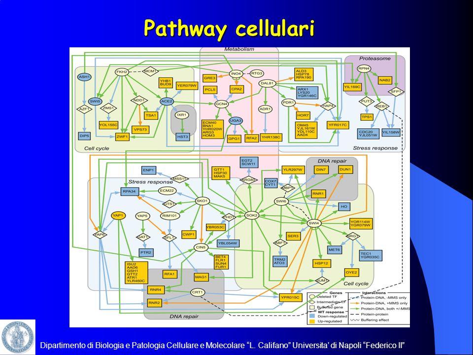Dipartimento di Biologia e Patologia Cellulare e Molecolare L. Califano Universita di Napoli Federico II Pathway cellulari