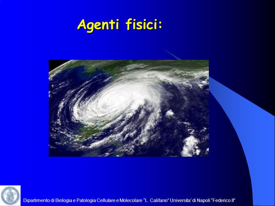 Dipartimento di Biologia e Patologia Cellulare e Molecolare L. Califano Universita di Napoli Federico II Agenti fisici:
