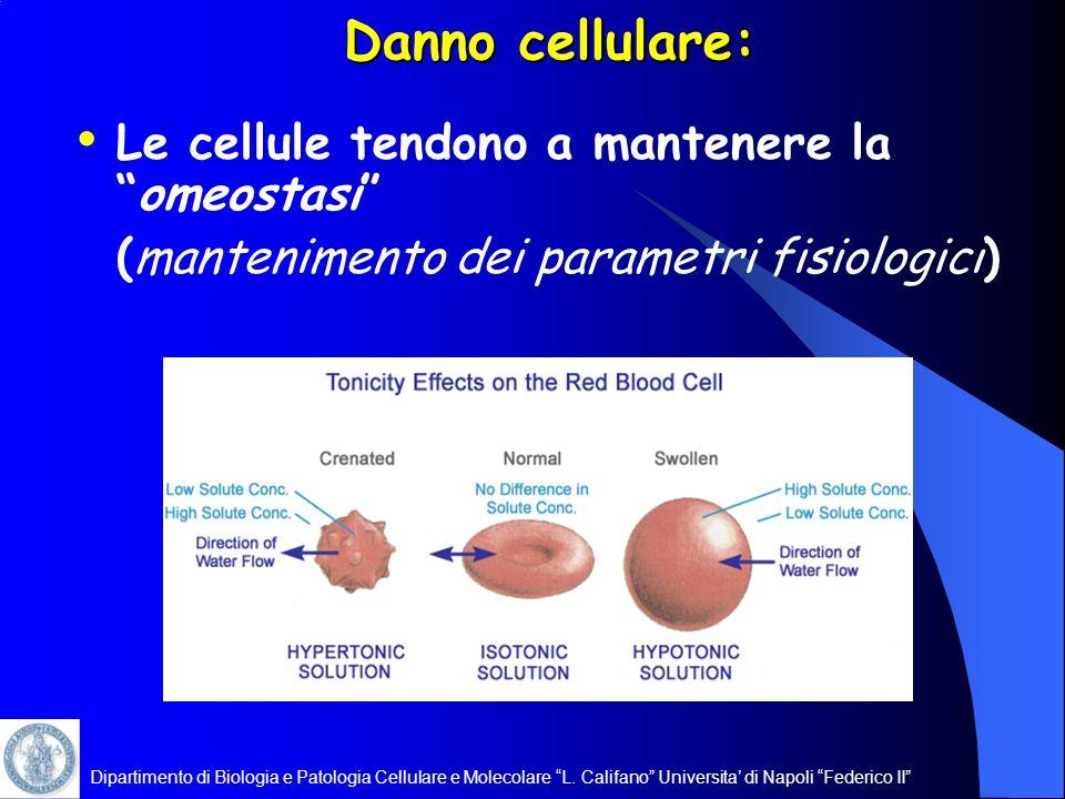Dipartimento di Biologia e Patologia Cellulare e Molecolare L. Califano Universita di Napoli Federico II Danno cellulare: Le cellule tendono a mantene