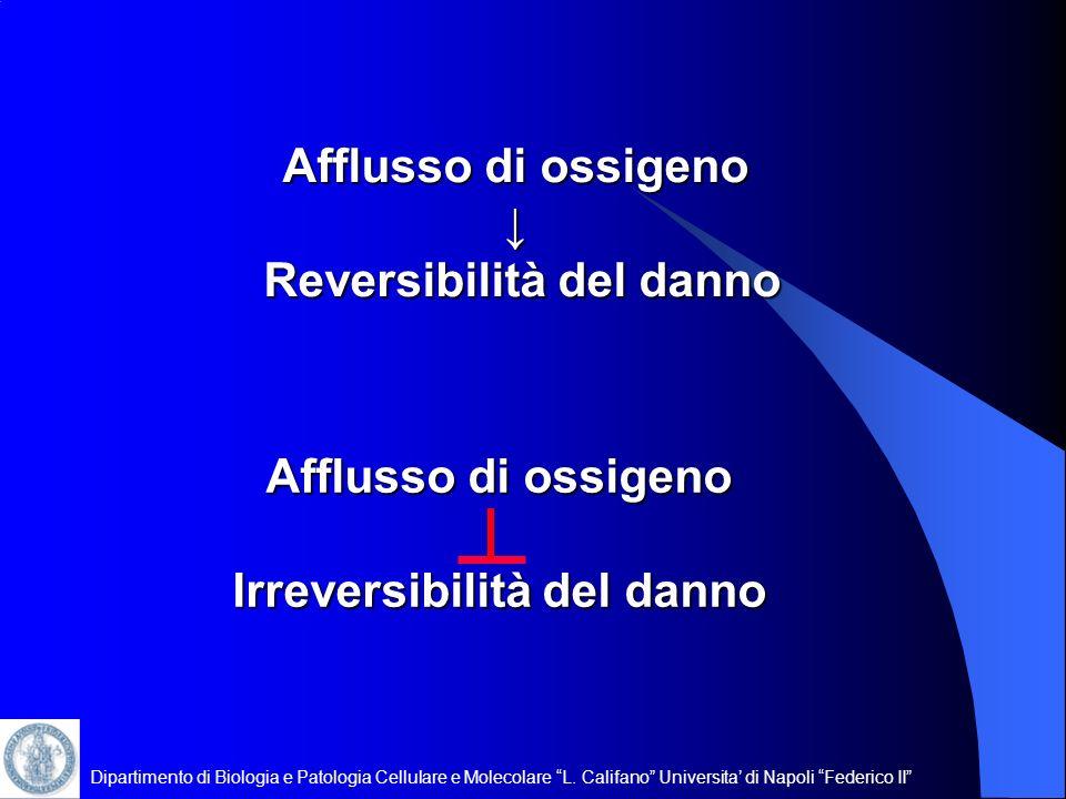 Dipartimento di Biologia e Patologia Cellulare e Molecolare L. Califano Universita di Napoli Federico II Afflusso di ossigeno Reversibilità del danno