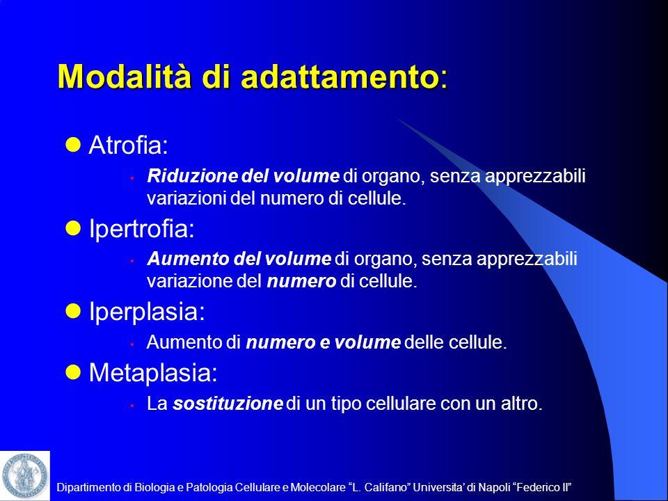 Dipartimento di Biologia e Patologia Cellulare e Molecolare L. Califano Universita di Napoli Federico II Modalità di adattamento: Atrofia: Riduzione d