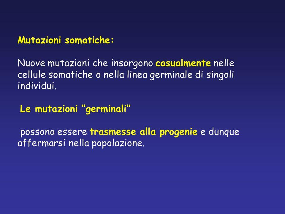 Mutazioni somatiche: Nuove mutazioni che insorgono casualmente nelle cellule somatiche o nella linea germinale di singoli individui. Le mutazioni germ