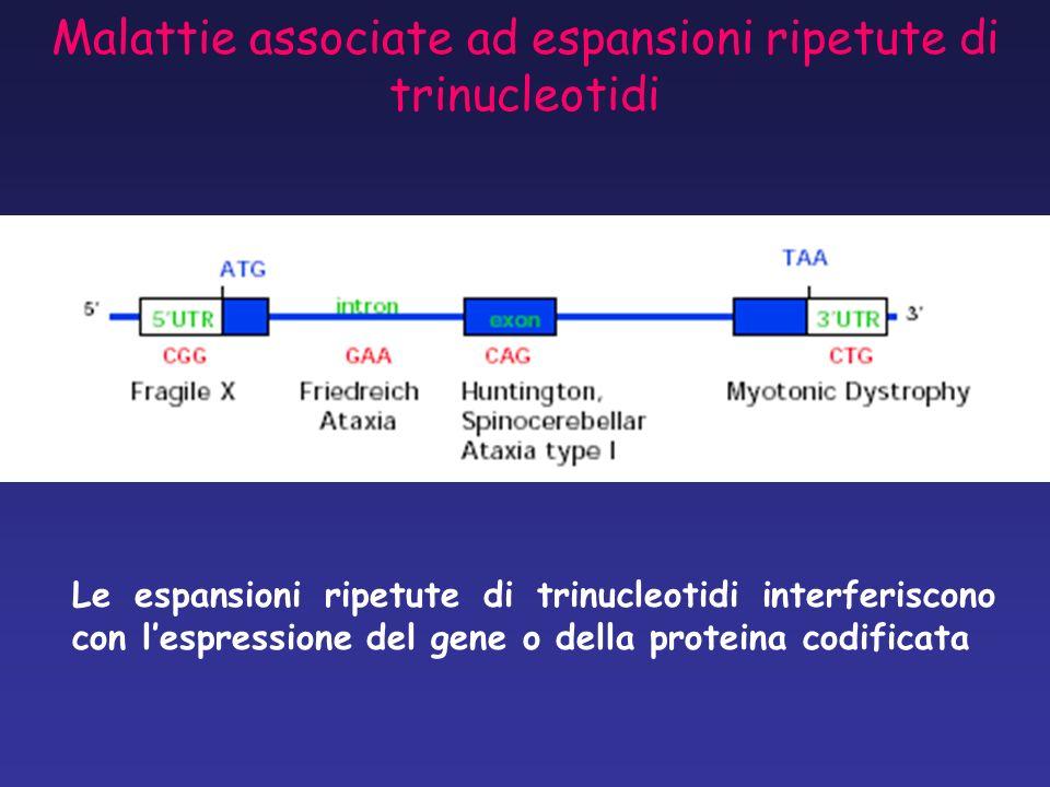 Malattie associate ad espansioni ripetute di trinucleotidi Le espansioni ripetute di trinucleotidi interferiscono con lespressione del gene o della pr