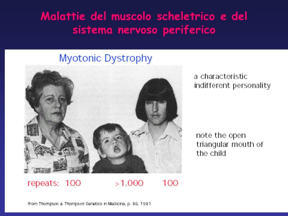 Malattie del muscolo scheletrico e del sistema nervoso periferico