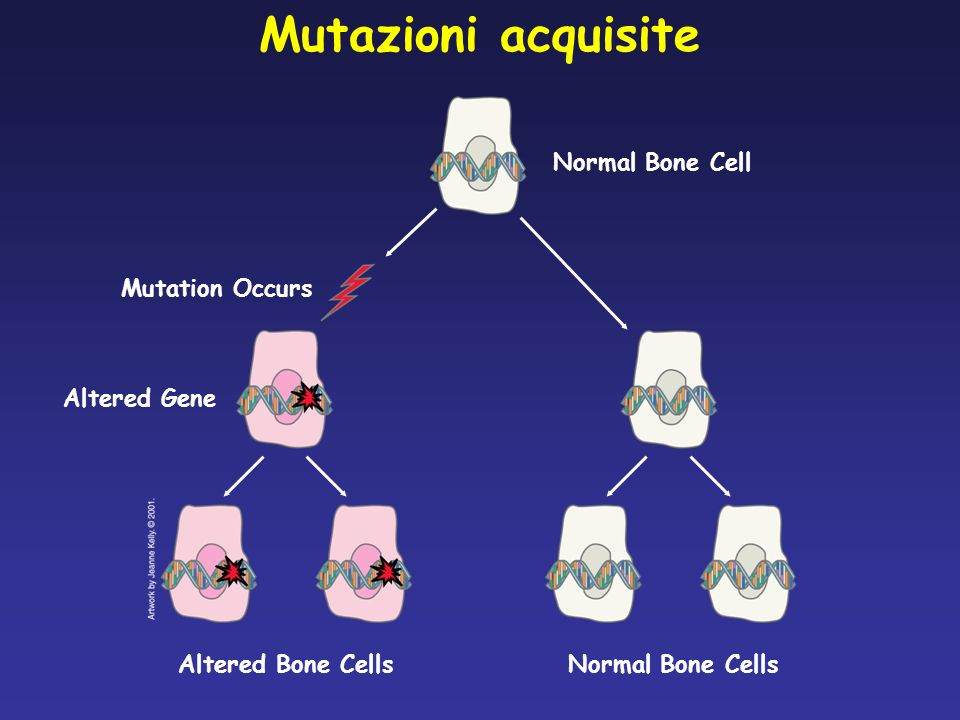 Mutazioni acquisite Altered Bone Cells Normal Bone Cell Normal Bone Cells Mutation Occurs Altered Gene