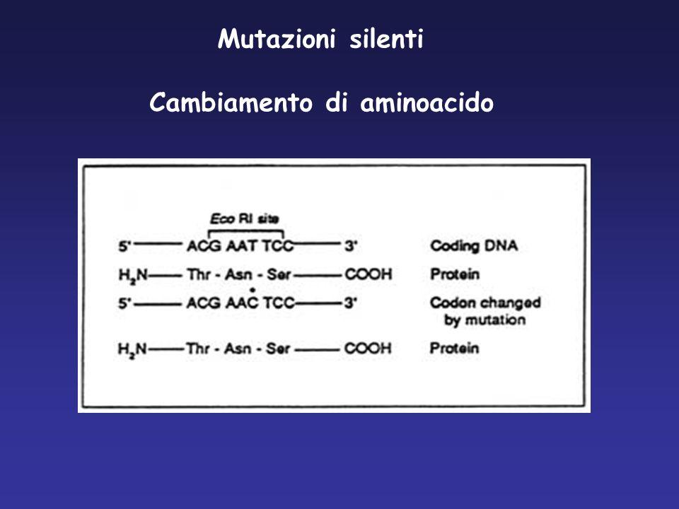 Mutazione per inserzione o delezione Inserzioni /Delezioni puntiformi (Scivolamento della cornice di lettura) Inserzioni /Delezioni di regioni più o meno ampie Ile IlePhe Gly Sequenza normale5- GAA AAT ATC ATC TTT GGT GTT TCC -3 Sequenza mutata5- GAA AAT ATC ATT GGT GTT TCC – Ile IleGly