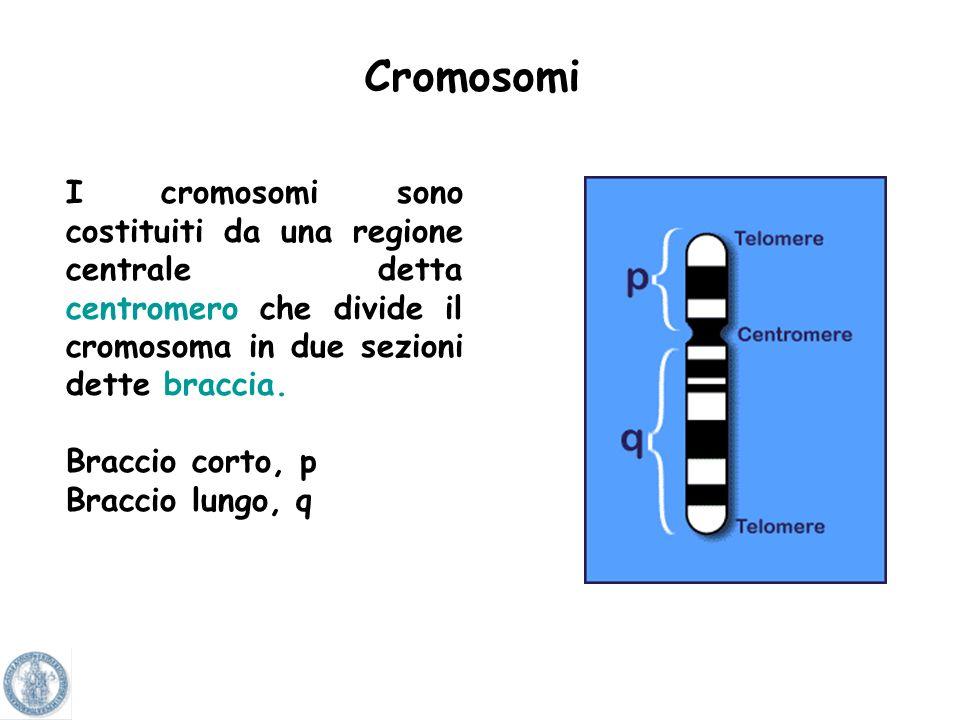 Nel nucleo di ciascuna cellula il DNA è compresso in strutture definite cromosomi