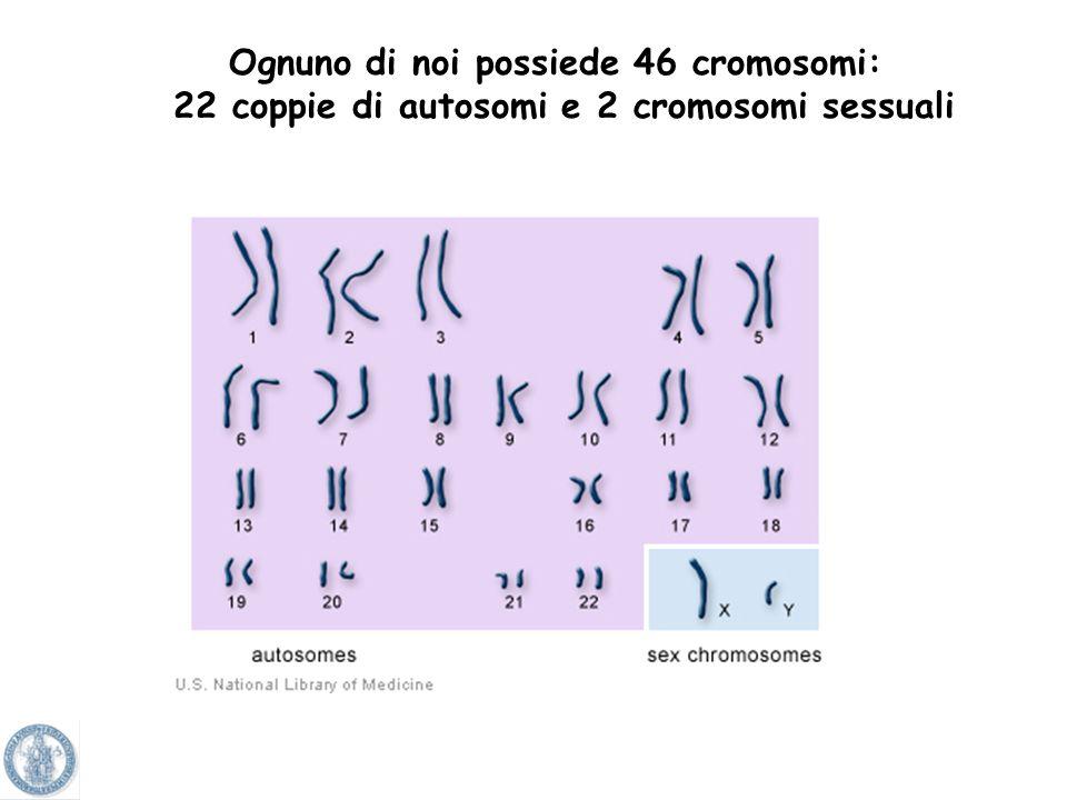 Ogni cromosoma è costituito da DNA strettamente avvolto a proteine definite ISTONI che fungono da supporto alla struttura del DNA