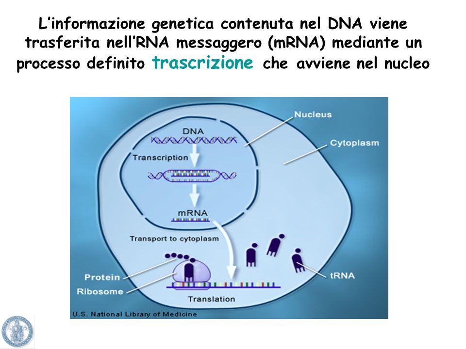 Alcuni geni si sono conservati durantelevoluzione. Sequenza simile tra uomo e altre specie. Il 74% dei geni noti nelluomo ha un corrispondente omologo