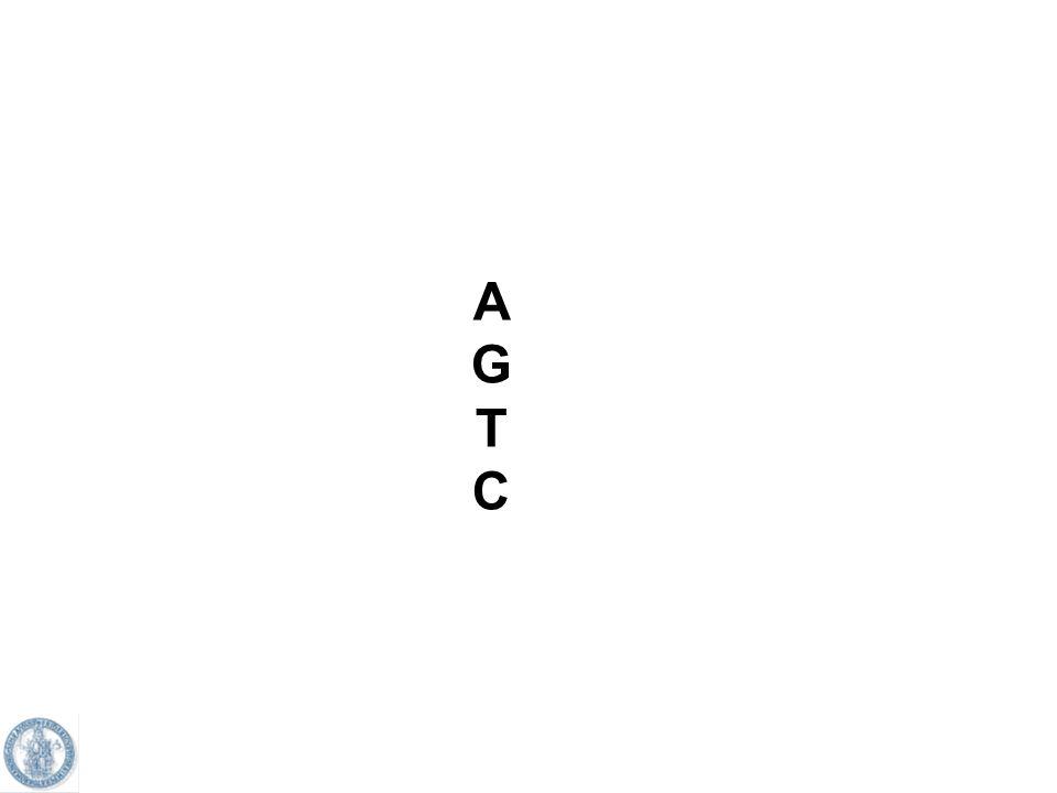 Come linformazione contenuta nel DNA e quindi nellmRNA è utilizzata per la produzione delle proteine?