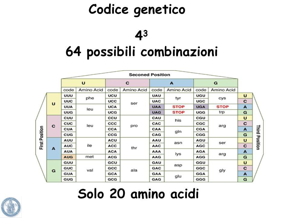 tre basi nucleotitiche del DNA/mRNA che corrispondono ad uno specifico aminoacido Codone: